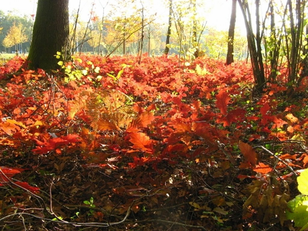 Fond d 39 cran automne gratuit tous vos fonds d 39 cran - Photo d automne gratuite ...